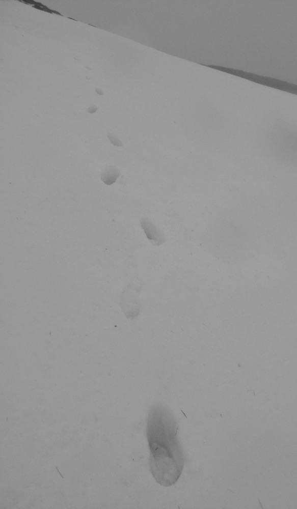 'Footprints in the snow' shot- sadly wet snow not new.