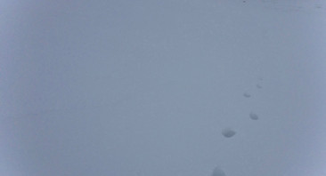 Wintry day.